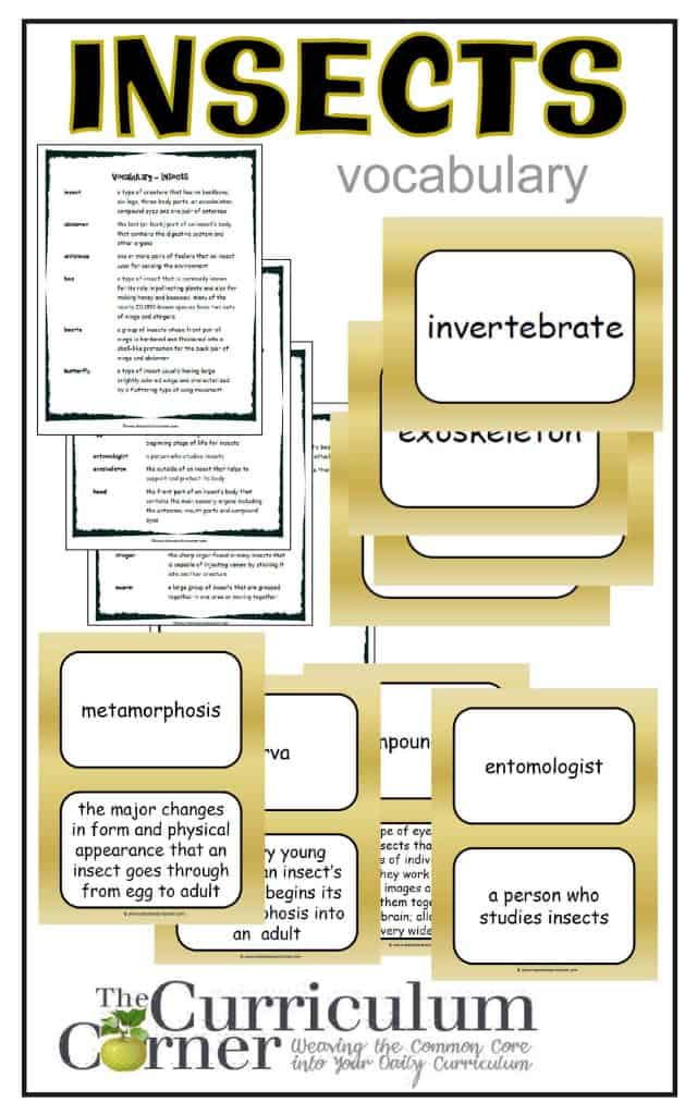 Insects Vocabulary Resources from The Curriculum Corner FREE