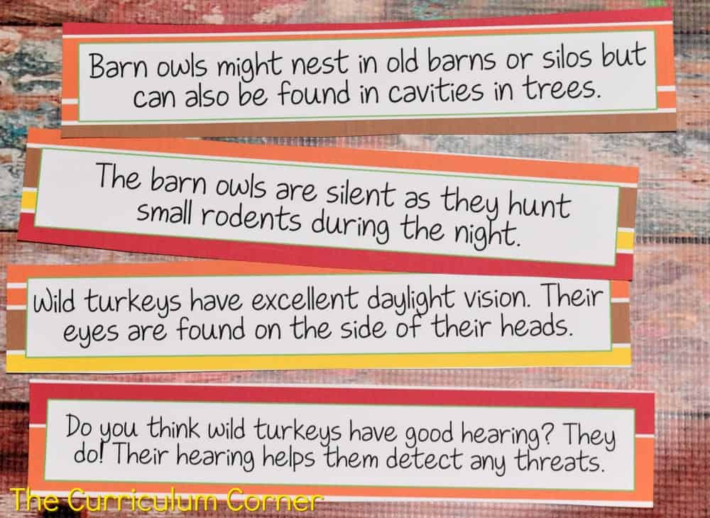 FREE Owls & Turkeys Informational Text Literacy Centers from The Curriculum Corner 5