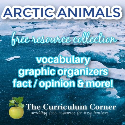 Focus on: Arctic Animals