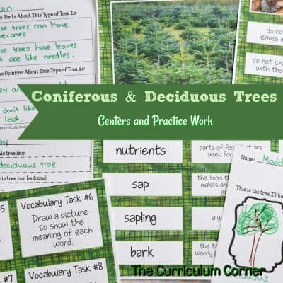 Coniferous & Deciduous Trees