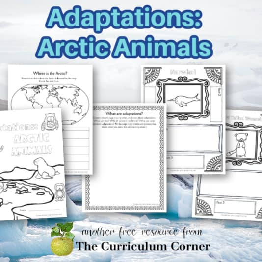 Adaptations: Arctic Animals